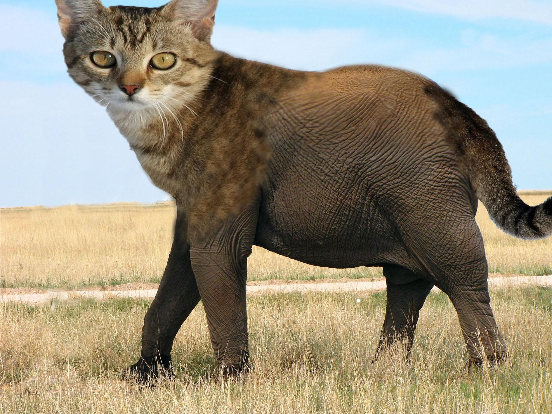 chat éléphant.jpg