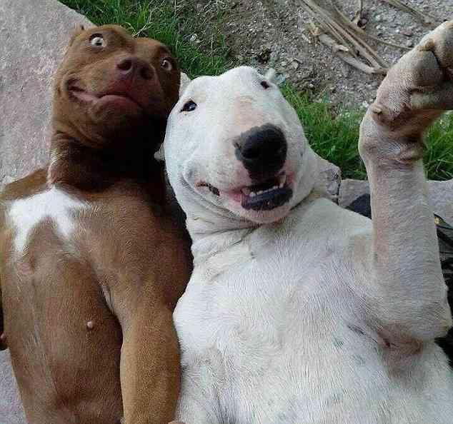 selfie-animaux-incroyable-humour-2.jpg