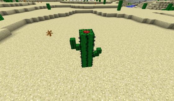 Un cactus original.