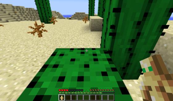 Ce cactus m'a attaqué.