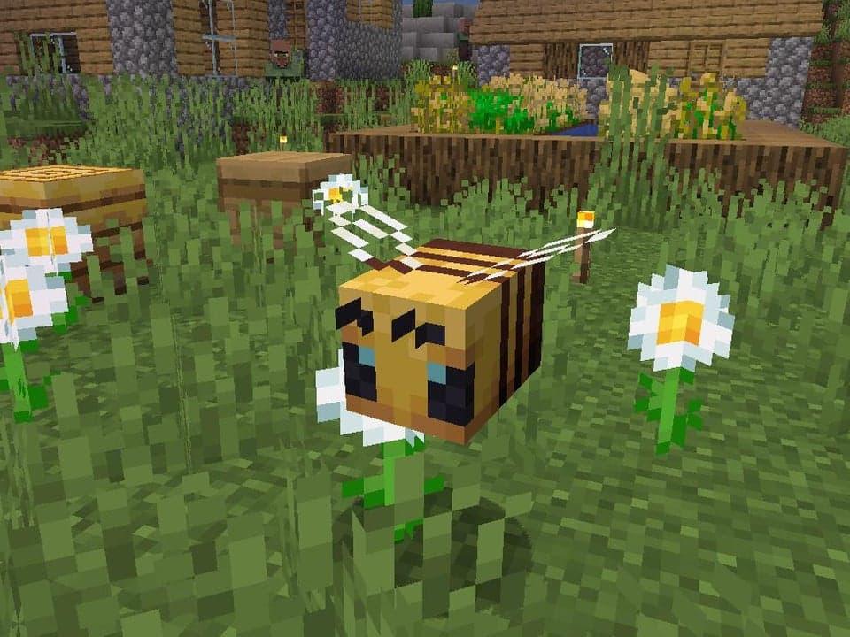 Une ENORME abeille