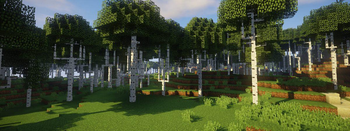 Dynamic Trees : bouleaux grêles dans une forêt dense