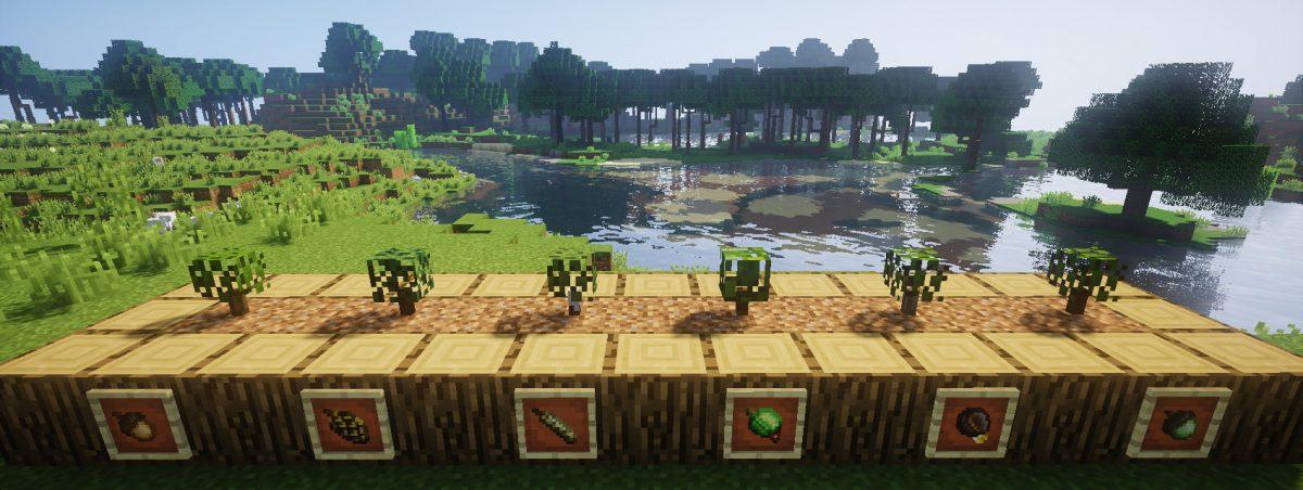 Dynamic Trees : Plants (chêne, épinette, bouleau, jungle, acacia et chêne foncé) et leurs graines respectives.