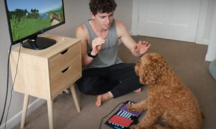 Il apprend à son chien comment jouer à Minecraft