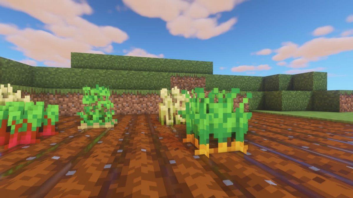 Vanilla PBR - Pack de Textures Minecraft : des plantations