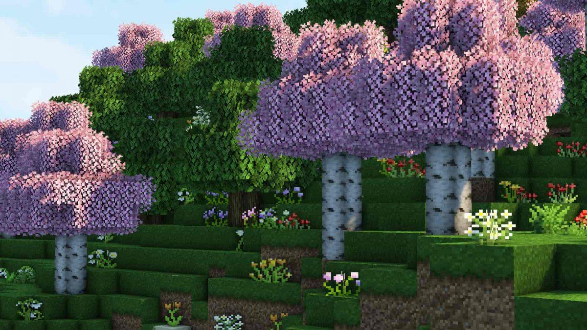 Stay True : cerisier en fleur