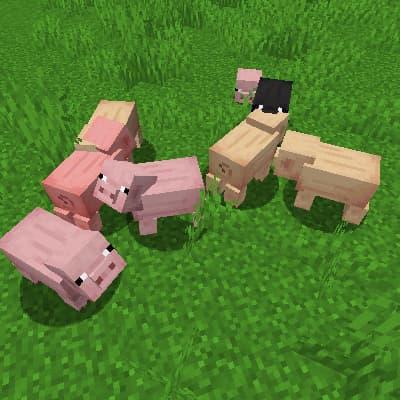 Variantes de textures d'animaux