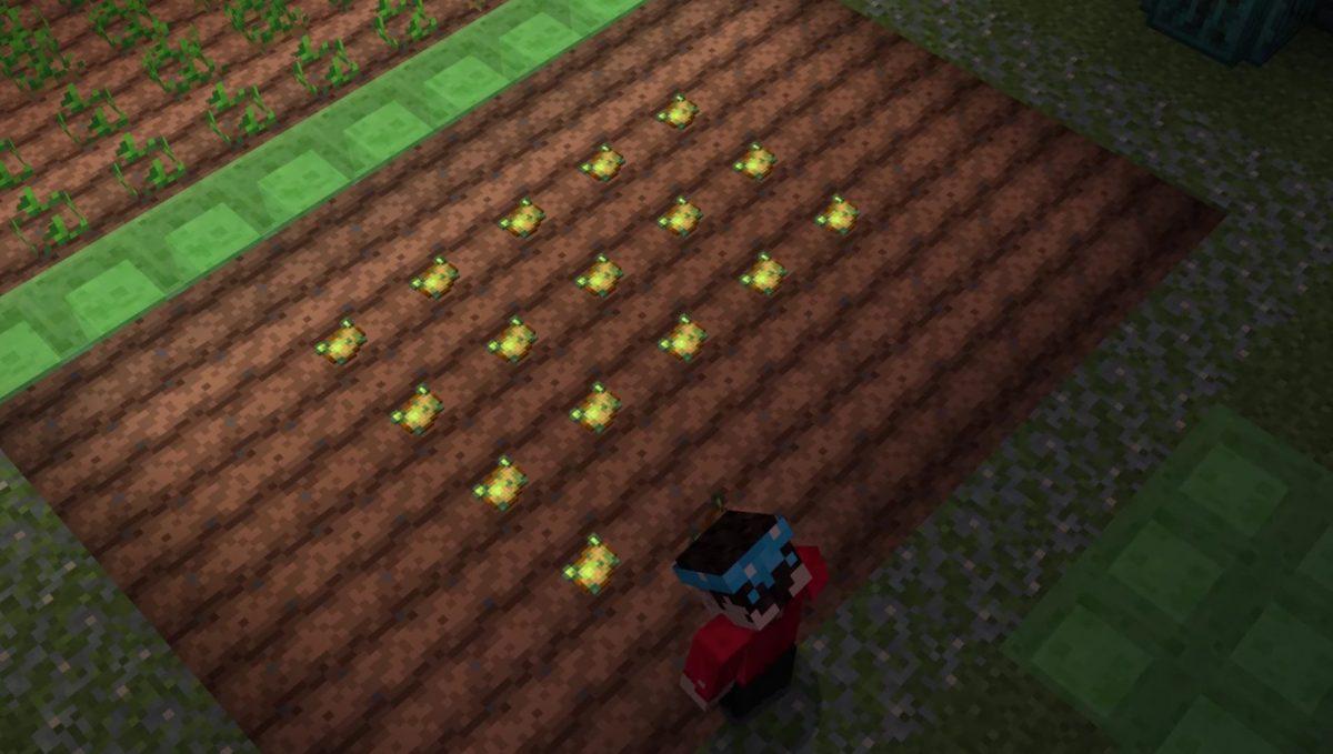 Les pommes de terres empoisonnées pour tuer les plantes