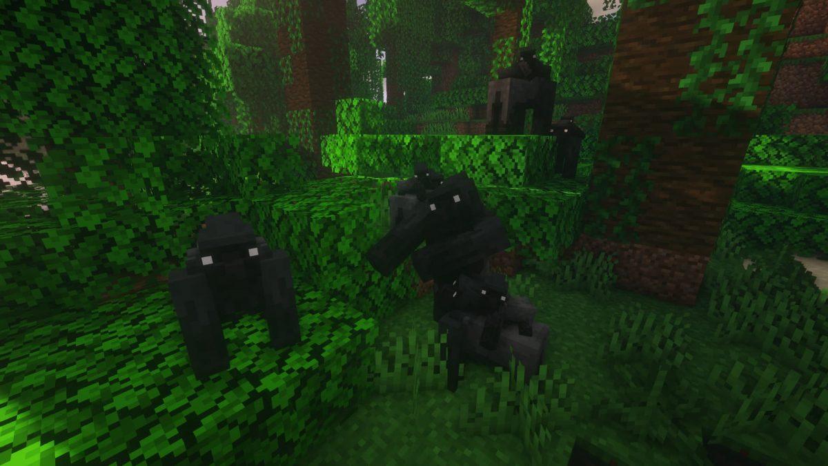 Un gorille à dos argenté se frappe la poitrine pour défendre son groupe.