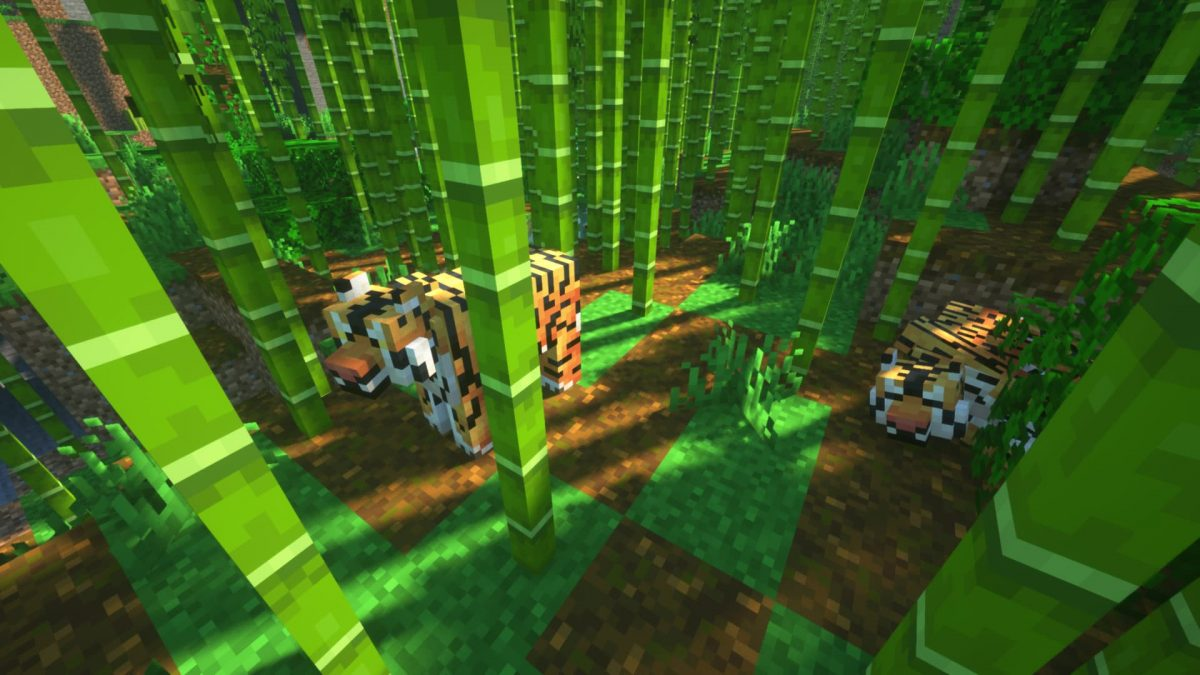 Deux tigres dans la jungle de bambous.